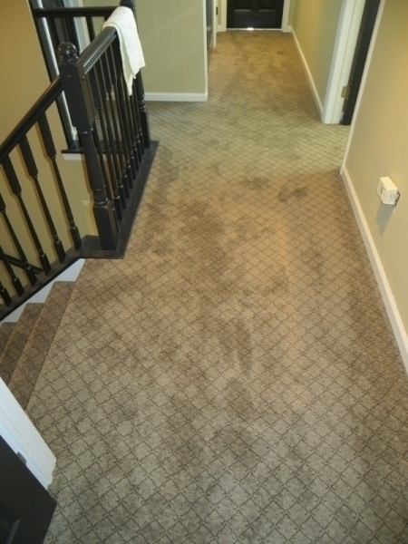 carpet_103
