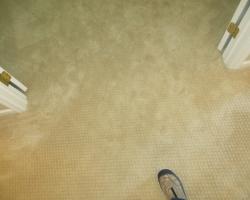 carpet_41